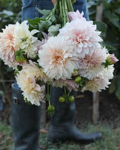 Canadian Thanksgiving, Holding Flowers, Grow Out, Dahlias, Give Thanks, Cut Flowers, My Flower, Pansies, Harvest