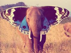 Just like Dumbo, but not sure how high butterfly wings could take an elephant.