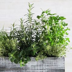 Easy DIY Container Gardens | Windowsill Herb Container | SouthernLiving.com