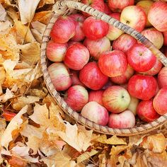 Basket of apples in a piles of leaves.. I wish the leaves were more vibrant in this photo