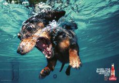 Publicidad de Salsa picante con perros