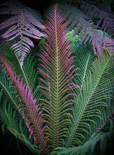 """""""Fabulous Ferns"""" by nature photographer Phil  Pippo on 500px.  Marjorie McNelly ConservaTory, St. Paul, Minnesota."""