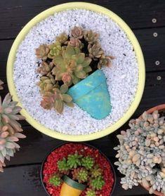 (notitle) - Franca's succulents ideas wedding Terrarium succulentes Succulents In Containers, Cacti And Succulents, Planting Succulents, Cactus Plants, Garden Plants, Indoor Plants, Planting Flowers, Succulent Gardening, Succulent Terrarium