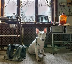 Photographer Captures Fun Portraits Of Her Dog In Abandoned Places Around Europe - DesignTAXI.com