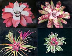 botanical artist Margaret Mee
