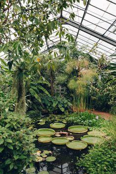 Dundee University Botanic Garden - from the Haarkon Greenhouse Tour.