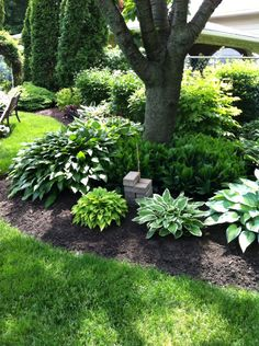 Mine of my hosta gardens Garden Yard Ideas, Backyard Garden Design, Garden Landscape Design, Lawn And Garden, Outdoor Landscaping, Outdoor Plants, Front Yard Landscaping, Outdoor Gardens, Shade Garden Plants