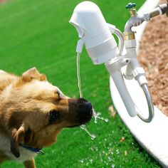 WaterDog—an Automatic Outdoor Pet Fountain. Running on a sensor, it detects when your dog approaches and then shuts off when he leaves. It installs easily and is designed to attach to your outdoor hose spigot, making it a seamless solution.