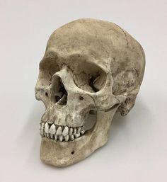 Schedel Decor menselijke schedel met lagere onderkaak replica