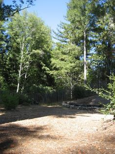 Backyard looking to Northern boundary.