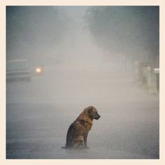 No one likes being alone, I wouldn't hesitate to walk into the middle of this road, pick up this brave little pooch, and take him home. #dogs #sadness #rain #mansbestfriend #friendship - @liamglenn7 | Webstagram