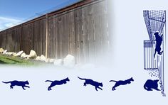 Cat Fence In keeps your cat safely in your backyard. Cat lovers voted CAT FENCE-IN as their favorite cat product in CAT FANCY magazine& 1995 Hall of Fame. Cat Pen, Cat Cages, What Cat, Outdoor Cats, Outdoor Areas, Fancy Cats, Cat Enclosure, Space Cat, Garden Fencing
