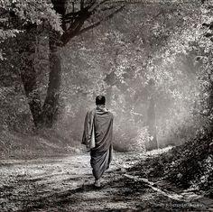 Zen Walk | Flickr - Photo Sharing!