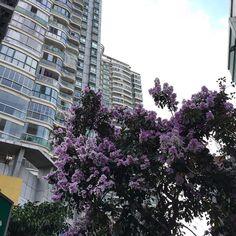 #Xiamen #Amoy