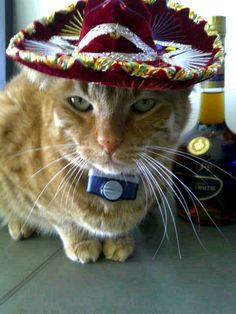 OMG so cute! This is Pablo, he's Kate Walsh's cat, wearing a sombrero sent to him from one of her fans. :)