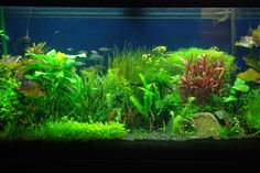 Fish Tank Moving Desktop Backgrounds | Best Looking Aquarium Background Wallpapers