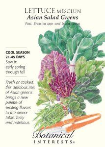 """Lettuce Mesclun """"Asian Salad Greens"""" Seeds by Botanical Interests. $1.99. Contains equal amounts of Arugula, Chinese Cabbage, Japanese Spinach, Mizuna, Mustard Red and Green and Tatsoi. As with most greens plant in cool weather.. A lovely mix of colors, tastes and textures.. Harvest young for tender salad greens and let some grow to use as cooked vegetables in stir frys.. Sow every 2 weeks so you will have a long harvest."""