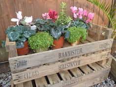 chitting trays upcycle - Google Search