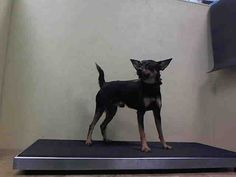 ★THANKS TO ESKIES ONLINE:  PEDRO – A1055400 IS SAFE!!! 11/5/15★