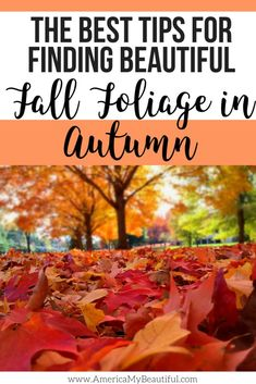 Use these tips to find the most beautiful fall foliage!
