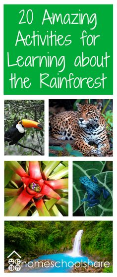 Children are fascinated by the rainforest! Incredible animals, giant plants, yummy fruit, chocolate–the rainforest is packed with learning possibilities. Rainforest Preschool, Rainforest Classroom, Rainforest Crafts, Rainforest Project, Rainforest Habitat, Rainforest Animals, Amazon Rainforest, Brazil Rainforest, Preschool Jungle