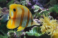 colorful fish natural habitat | Tropical Fish Wonderful Natural Color Design | World Visits