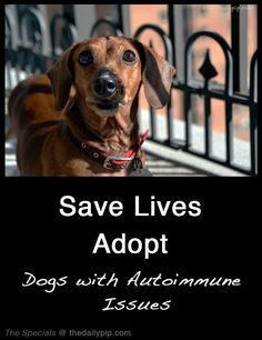 The Specials: Adopting a Dog with Autoimmune Issues