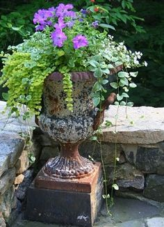 urn spilling with petunia, variegated licorice vine, creeping jenny