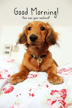 Good Monday Morning dog - How was your weekend? Good Monday Morning, Good Morning My Friend, Good Morning Sunshine, Good Morning Picture, Good Morning Good Night, Morning Pictures, Good Morning Images, Morning Pics, Good Morning Animals