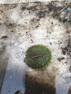 turtle, May 5th 2015
