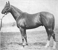 Star Shoot(1898)Isinglass- Astrology By Hermit. 3x5 To Newminister. 10 Starts 3 Wind 1 Second 3 Thirds. Won National Breeders Produce Stakes. Sold To U.S. For Breeding. Leading Sire In U.S. In 1911,12,16,17 & 1919. Leading Broodmare Sire In 1924,25,26, 1927,28, & 1929. Died In 1919.