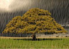 chuva caindo do ceu - Pesquisa Google