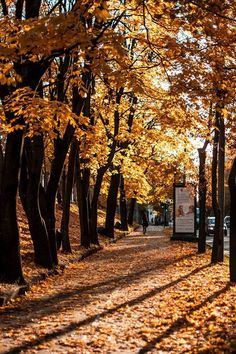 Autumn has come and coloured Riga orange!