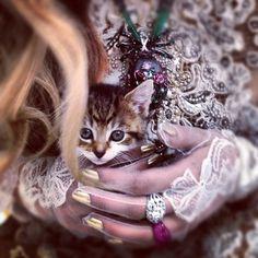 kitten in jewels.