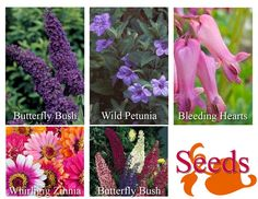 Attracting Hummingbirds and Butterflies to your yard...Sue 2013