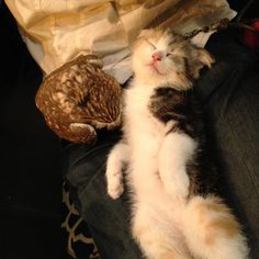 フクちゃん、2度寝。 マリちゃん、寝たふり Huku is sleeping twice. Mari is pretending sleeping.