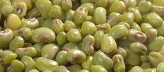 Aromas do Cumbuco: Benefícios do Feijão Verde