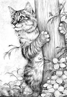 Cat Coloring Book for Adults Luxury Cat Pet Animal Coloring Pages Colouring Adult Detailed Free Adult Coloring Pages, Cat Coloring Page, Animal Coloring Pages, Colouring, Coloring Book, Pencil Art Drawings, Art Drawings Sketches, Cat Drawing, Animal Sketches