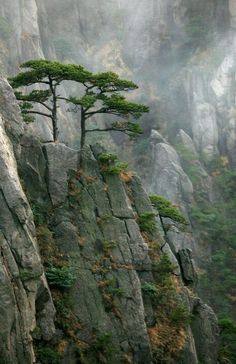 Lone trees in the mountains. Japan. #LandscapeForest