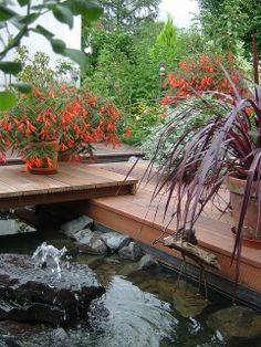 Festival Burgundy cordyline, an extremely drought-tolerant, architectural foliage plant and Bonfire begonias - drought- and heat-tolerant in the sun and a color dazzler in the shade - both make wonderful container plants, simply as solo plantings. As seen here, they sparkle when placed near a water feature or pond.