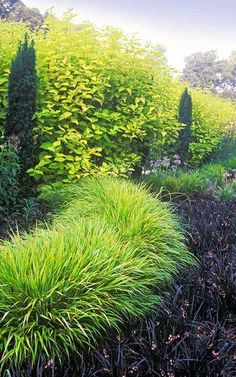 Minimalist design using 1 of each variety; grass, conifer, shrub, perennial