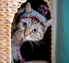 #Knitted Bobble #Hat for #Cats - Craftfoxes