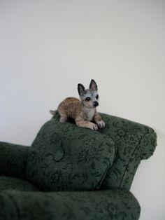 1/12 Chihuahua