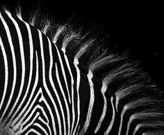Monochrome Beauty by Theresa Elvin, via Flickr