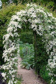 for every month of the year Clematis wilsonii 'Montana' - a gorgeous climber!Clematis wilsonii 'Montana' - a gorgeous climber! Garden Arbor, Garden Gates, Garden Landscaping, Garden Trellis, Garden Shrubs, Garden Plants, Moon Garden, Dream Garden, Big Garden