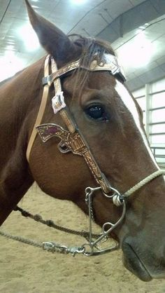 Great horse tack at Lone Star Country Store. #horse #horsetack