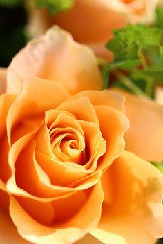 .such a pretty color