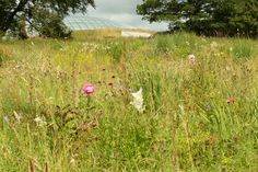 The National Botanic Garden of Wales, Towy Valley, Carmarthenshire