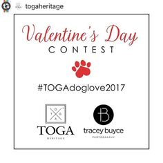 Last Day to enter this awesome giveaway!!! ---->>>> Fur Family Photoshoot Valentine's Day Contest! Love is in the air...#TOGAdoglove2017 Are you a Saratoga local or just a local at heart? Do you LOVE your dog?  Would you like a family photoshoot with your dog in Saratoga? Well you're in the right place...we love our dogs too! @TOGAHERITAGE and @Tracey_Buyce_Photography are teaming up to give one lucky family a Saratoga Photoshoot Experience. We know families come in all shapes and sizes and…