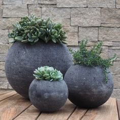 Patio Succulent Garden Design Archives - Succulent Gardening The Challenge of Families Angie grew up Succulent Gardening, Succulent Pots, Succulents Garden, Container Gardening, Planting Flowers, Flower Gardening, Succulent Care, Garden Terrarium, Outdoor Planters